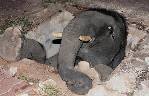 Beba slona u šahtu