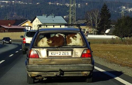 Krave u gepeku