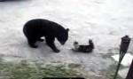MaÄŤka napala medvjeda