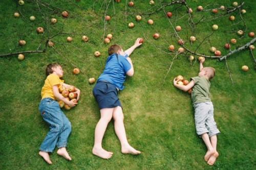 BeraÄŤi jabuka