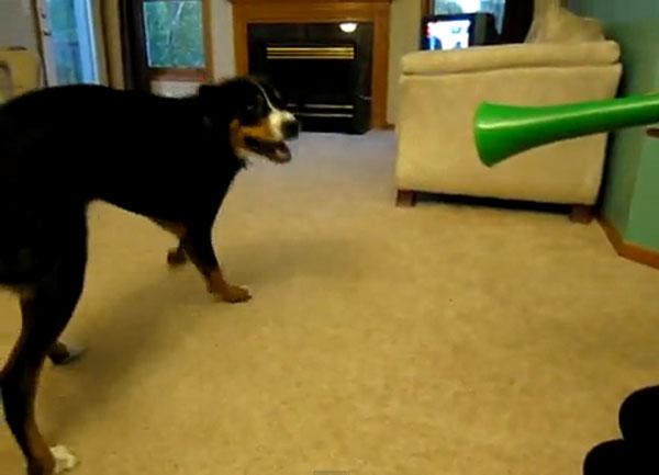dogs vs vuvuzelas