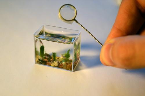 Najmanji akvarij na svijetu