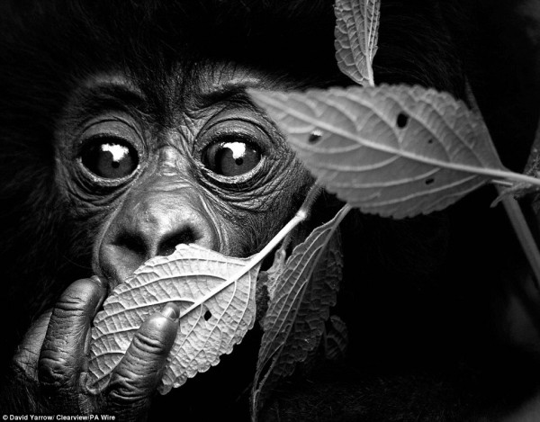 Face to face with animals by David Yarrow